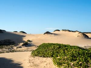 Just In Time Prime Holiday Resort Dunes
